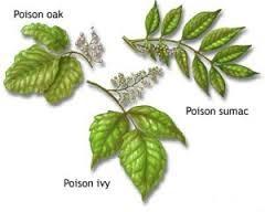 poisonivy2